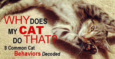 Why Does My Cat Do That? 8 Common Cat Behaviors Decoded.