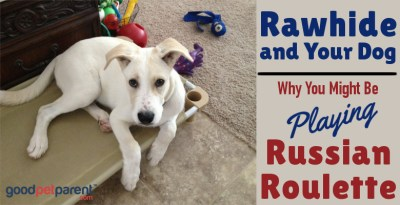 Rawhide and Your Dog: Why You Might Be Playing Russian Roulette
