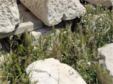 Avoid overgrown grassy areas where foxtails might be lurking.