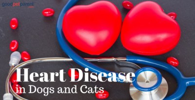 Heart Disease in Dogs and Cats