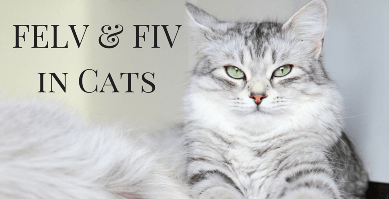 Goodpetparent FELV FIV in Cats