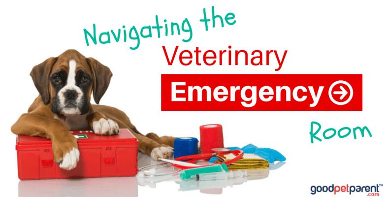 Navigating the Veterinary Emergency Room - Good Pet Parent