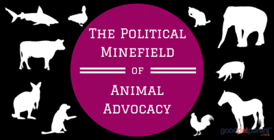 Feature Image: Political Minefield Animal Advocacy
