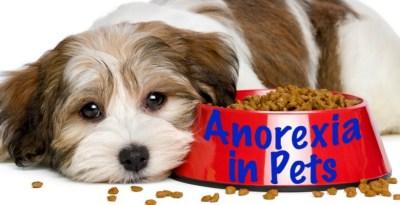 Good Pet Parent feature image of dog next to food bowl
