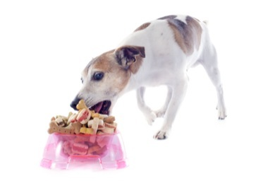 Good Pet Parent dog eating treats from a food bowl