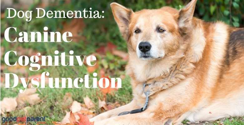 Canine cognitice dysfuntion syndrome