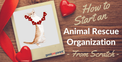 How To Start An Animal Rescue Organization – From Scratch