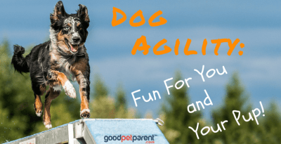 dog agility fun for you and your pup feature image