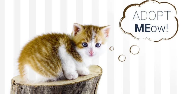 kitten with adoption message from Cool Cats animal rescue