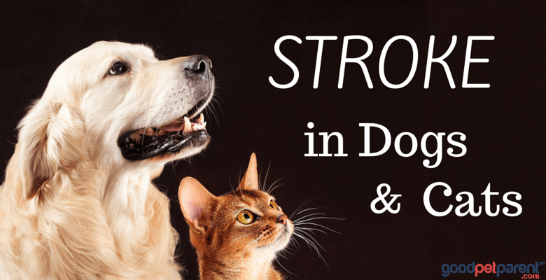 Stroke in dogs and cats feature image
