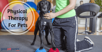 Physical Therapy for Pets feature image