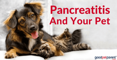 Pancreatitis And Your Pet Feature Image