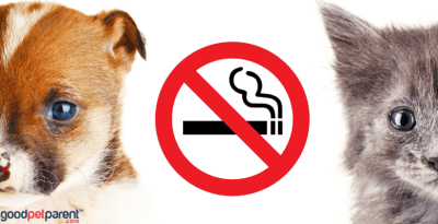 Second-Hand Smoke And Pets Feature Image