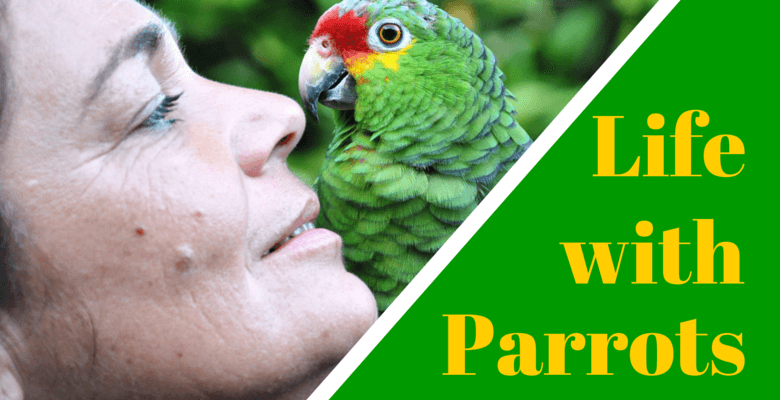 Life with Parrots Feature Image