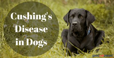 Cushing's disease feature image