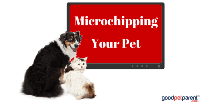 Microchipping Your Pet Feature Image