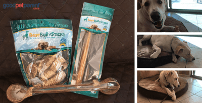 Bully Sticks Safe Dogs Feature Image