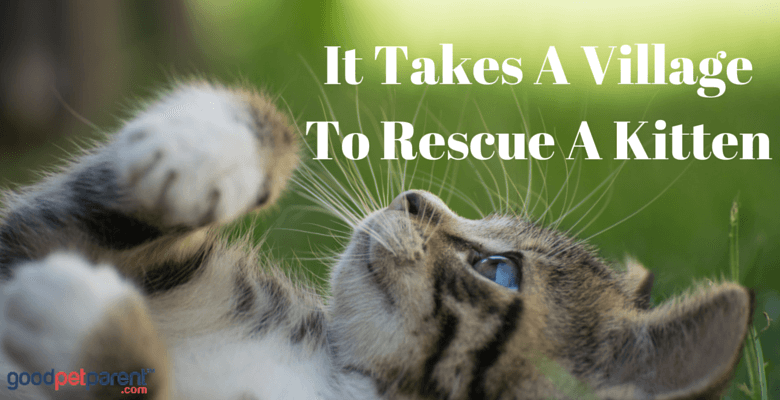 It Takes A Village To Rescue A Kitten Feature Image