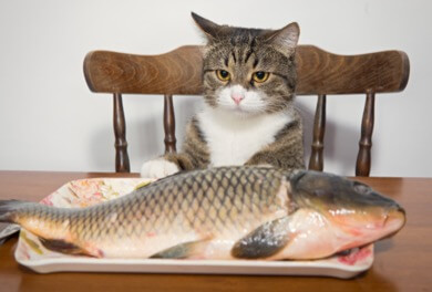 cat with fish on serving plate