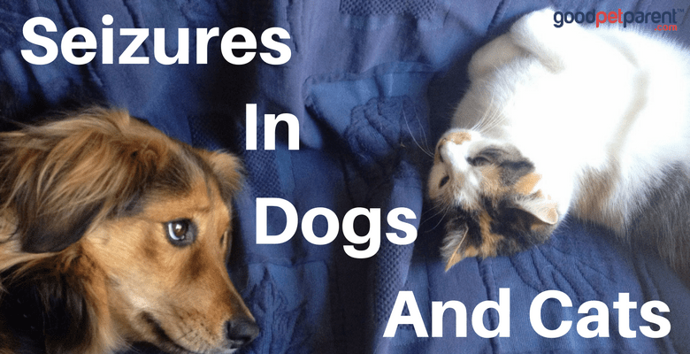 Seizures In Dogs And Cats Feature Image