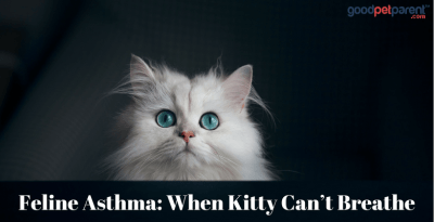 feline asthma-when kitty cant breathe feature image