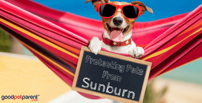 Protecting Pets from Sunburn Feature Image