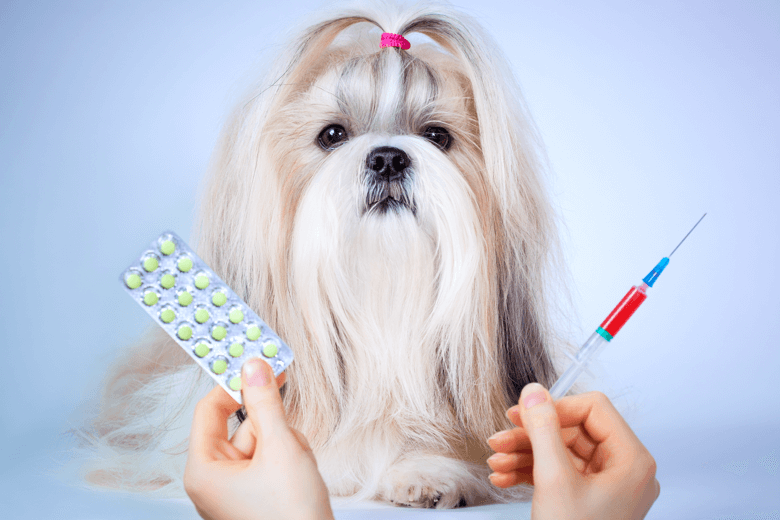 dog both oral and injectable meds drugs