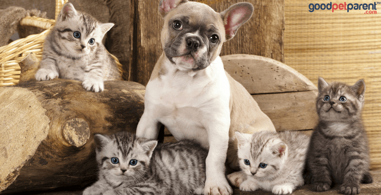 Cerebellar Hypoplasia in Dogs and Cats Feature Image