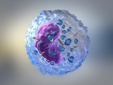 3D image of Lymphocyte