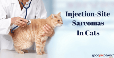 Injection-Site Sarcomas In Cats Feature Image
