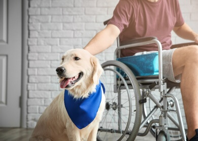 Dog with person in wheelchair
