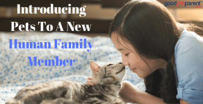 Introducing Pets To A New Human Family Member