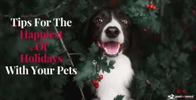 Tips For The Happiest Of Holidays With Your Pets Feature Image