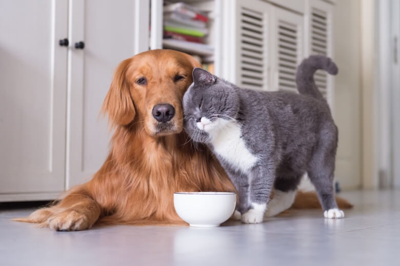 Dog and cat with food bowl