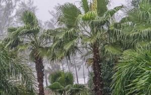 Monsoon reached Mumbai, spread to all parts of Maharashtra