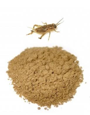 Cricket flour
