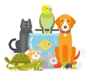 cat, bird, dog, turtle, lizard, bunny, guinea pig, sitting around a fish bowl