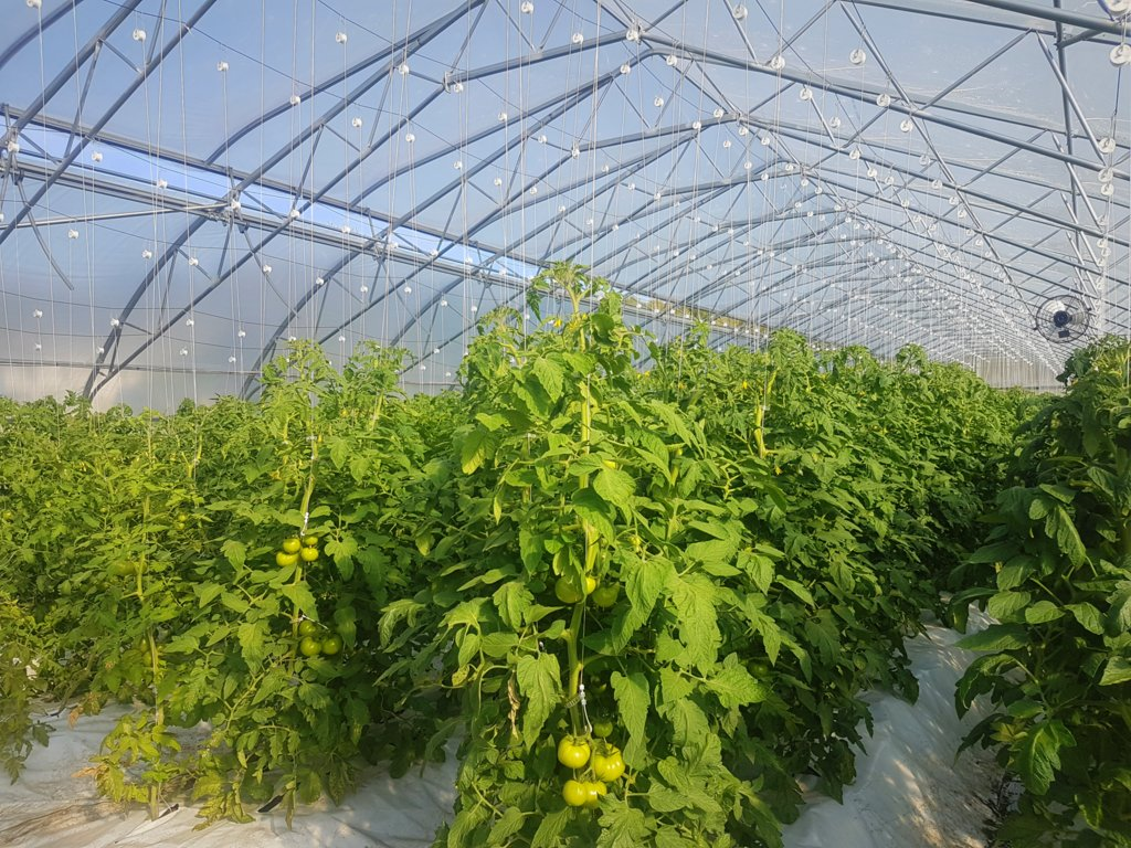 Greenhouse Worker Full Time Graham S Farm Market Minden