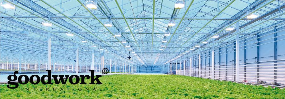El uso de la tecnologa LED en la horticultura  Good Work