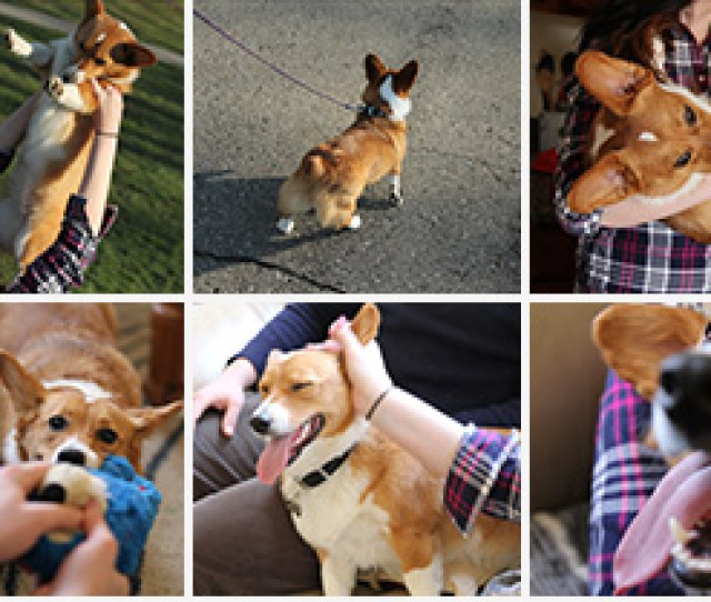 Your Photos Are Organized And Searchable By The Places And Things In Them No Tagging Required Just Search Dog To Find All The Photos Of Your Pup
