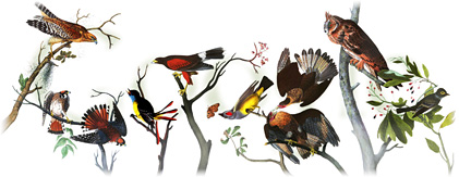 Google Doodle Audubon
