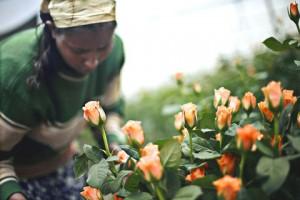 flower farm ees