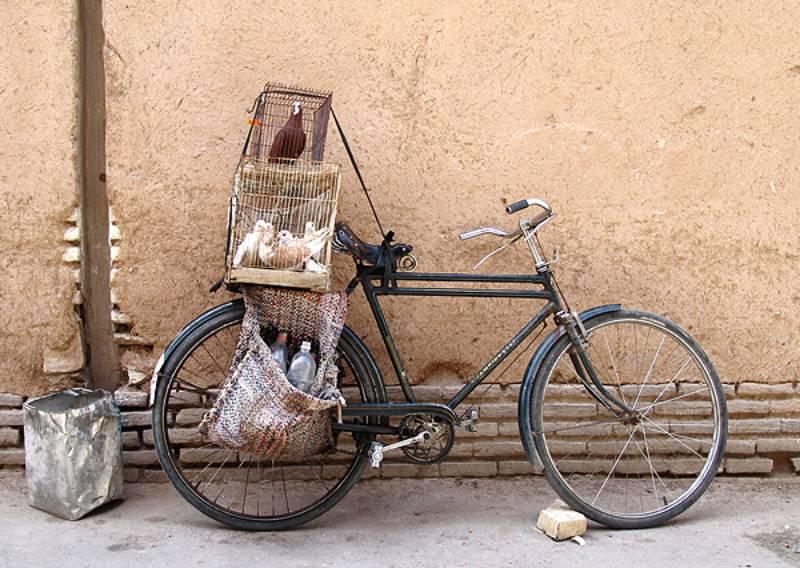 قفس پرنده دوچرخه