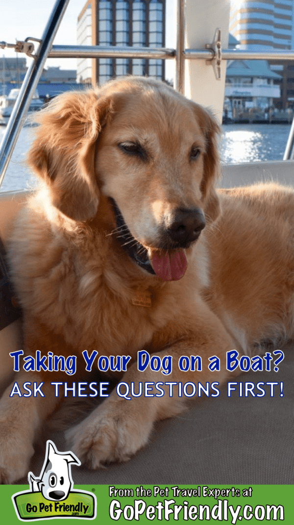 Taking Your Dog On A Boat? Ask These 5 Questions First | GoPetFriendly.com