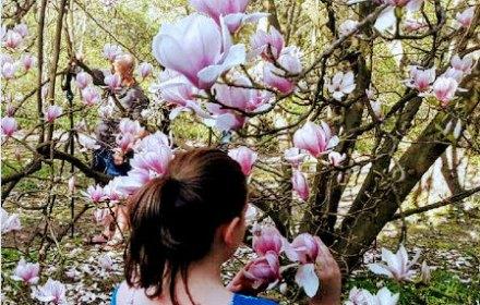 Разгар весны в Варшаве. Поляки фотографируют, как цветет сакура и магнолии