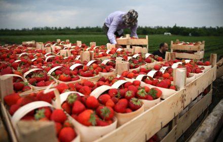 У Польщі відмінили карантин для сезонних працівників