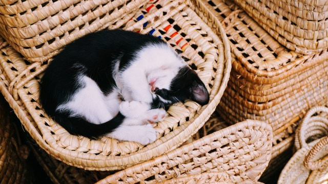 cat curled up in basket