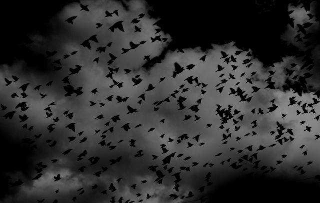 bats in the sky