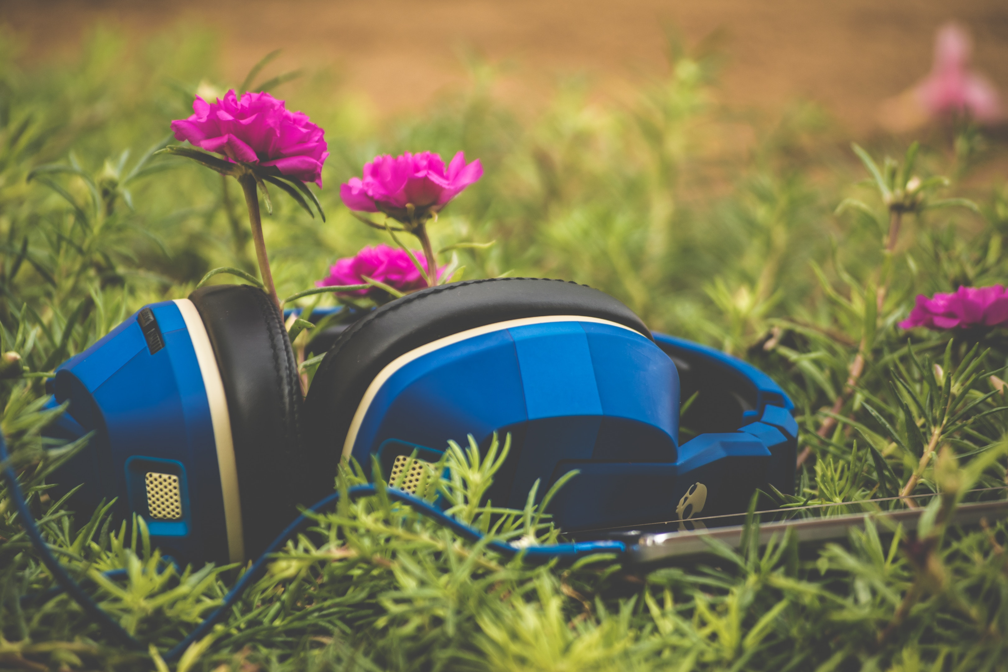headphones and pink flowers