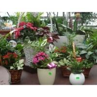 Houseplant Arrangements